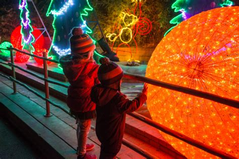 Holidays At The Los Angeles Zoo 50th Birthday Holiday Discount Tickets To See La Zoo Lights Socal Field Trips