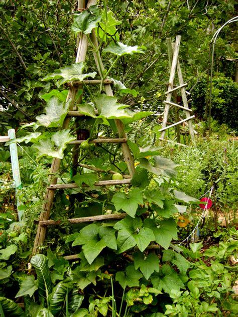 Vertical Vegetable Gardens Vertical Vegetable Garden Vertical Vegetables And