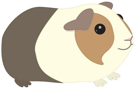 Small Home Designs contact me guinea piggies designs