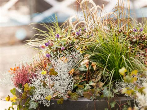 winter gardening plants autumn into winter containers saga