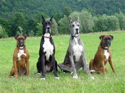 worlds dogs world s breeds slideshow