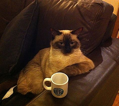 drank coffee why don t cats drink coffee catfoodbreath feline fabulous