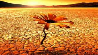 desert flower matan caspi desert flower oasis mix youtube
