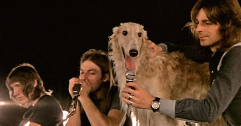 dogs pink floyd why pink floyd is every s favorite band