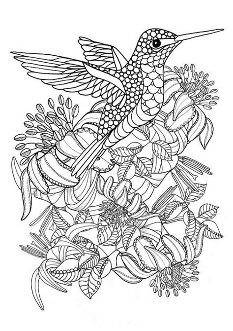 coloring pages for adults hummingbird hummingbird printable coloring pages digital download of