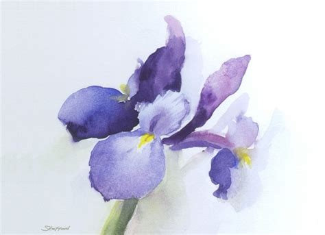iris watercolor art pinterest