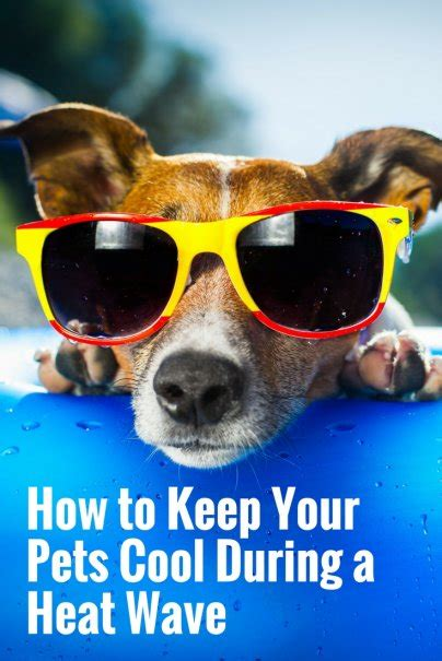 Keep Cool Heat Wave Sweeps The U S by How To Keep Your Pets Cool During A Heat Wave