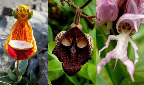 imagenes de flores que parecen animales orquideas que parecen animales