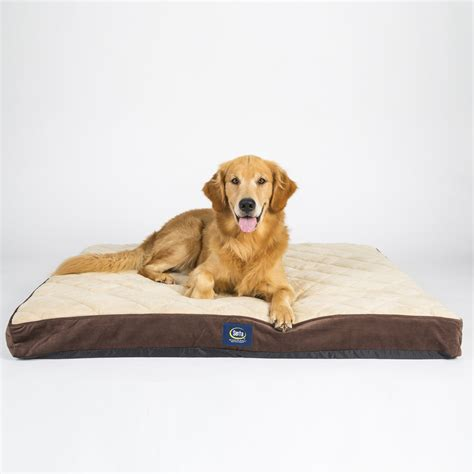 top dog beds serta orthopedic dog bed classy top 7 best serta dog bed reviews your perfect match