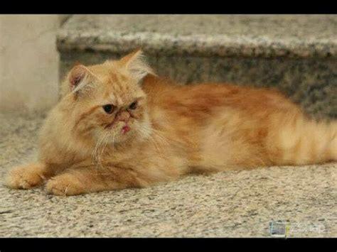 Ovula Cat 10 Softgel Obat Kucing kucing dijual leviana cat