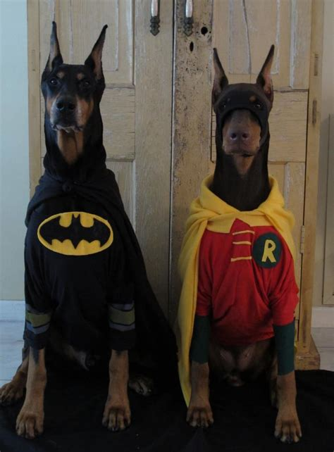 batman puppy irti picture 2627 tags batman robin costumes