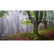 Gorbea Natural Park Spain  Feel The Planet