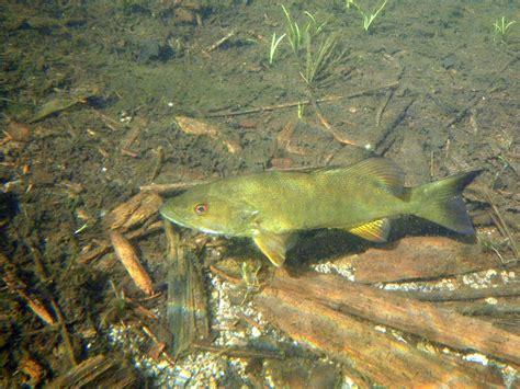 backyard bass pond bullet pond journal