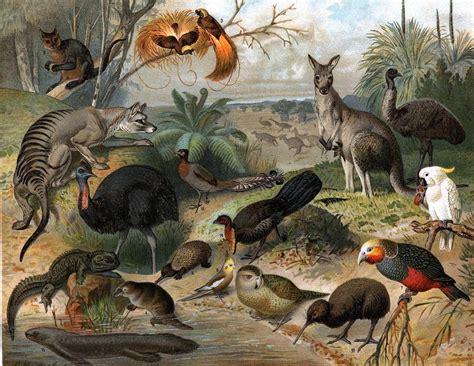 la fauna pictures imagenes de la flora y fauna newhairstylesformen2014 com