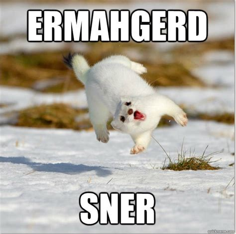Ermahgerd Animal Memes - ermahgerd sner boardgamegeek boardgamegeek