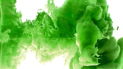 imagenes de rosas verdes image gallery imagens da cor verde
