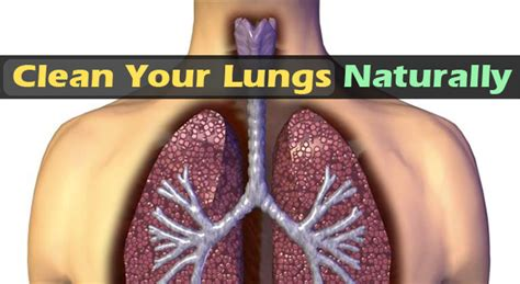 Detox Tobacco Garlic by Cleanse Your Lungs By Garlic At This Specific Time