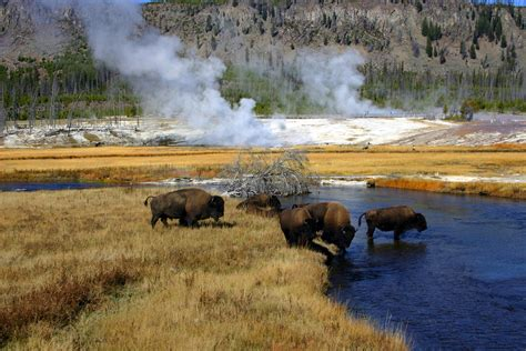 insider s guide to yellowstone where to trek and geyser