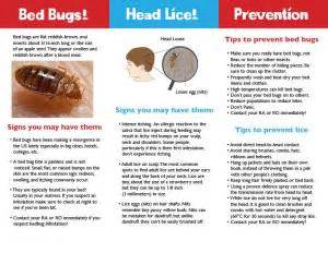 Bed Bug Prevention Independent Project Bed Bug And Lice Prevention