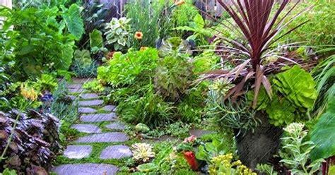 Lu Hias Untuk Rumah tanaman hias untuk halaman rumah dan manfaatnya
