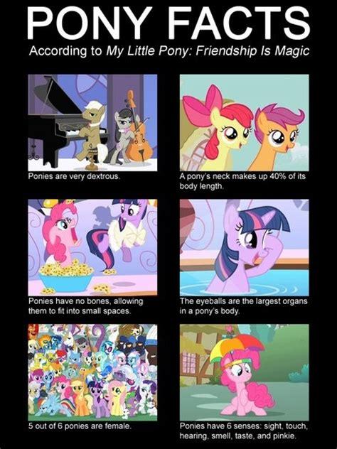 Mlp Funny Memes - best 25 mlp pony ideas on pinterest mlp my little pony