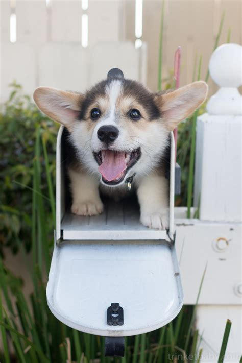 emergency puppy real emergency puppy on quot puppy in a mailbox http t co sijw4jta2a quot
