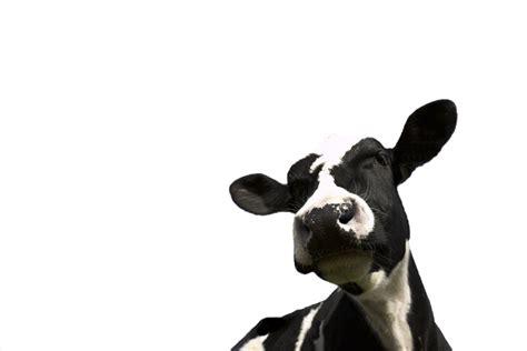 making carbs count milking it desang diabetes services
