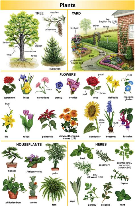 garden definition  english language learners