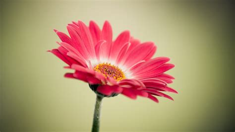 flower pic 30 beautiful flower images free to download