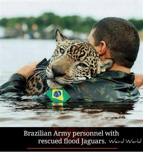 Jaguars Memes - 25 best memes about jacksonville jaguars jacksonville