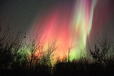 northern lights trees syn mirror northern lights meets trees by