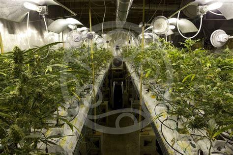 marijuana grow rooms cannabis grow room ventilation philosopher seeds