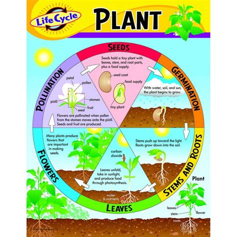 how to bring a plant back to life 25 best ideas about plant life cycles on pinterest life