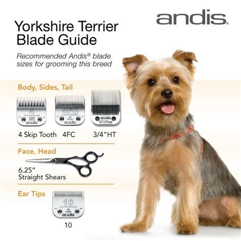 yorkie grooming tips animals the o jays and happy on