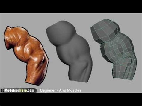 how to model arm muscles low poly beginner 3d modeling