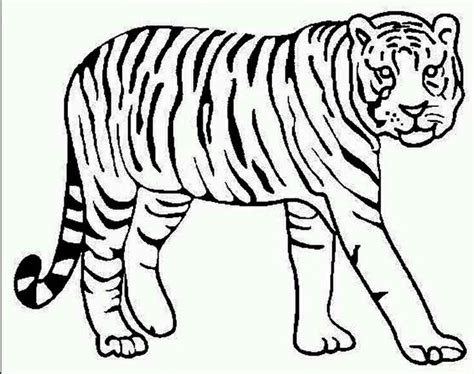 Coloring Page Tiger Animal Printable Pinterest Tiger Coloring Book Pages