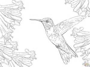 Seagull Coloring Pages Realistic Coloring Pages Realistic Coloring Pages