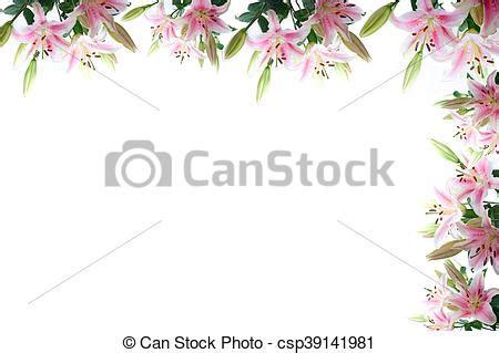 cornice fiori cornice fiori giglio composizione copyspace sopra