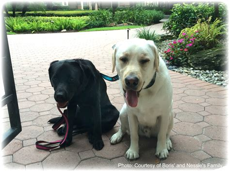 dog house bail bonds dog house bail bonds daytona beach florida noten animals