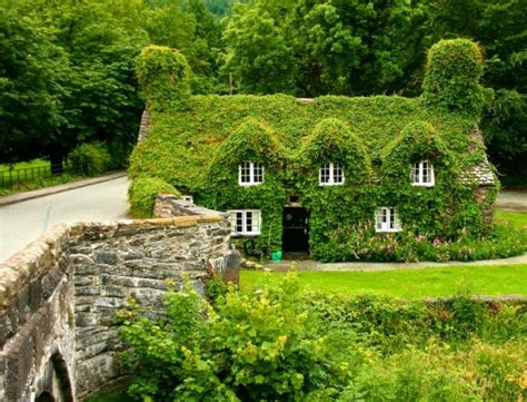 house climbing plants 22 peaceful cottage designs that seem like taken from a