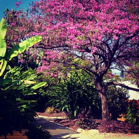 Arcadia Botanical Gardens Cobalt Violet At The Los Angeles Arboretum And Botanical Gardens