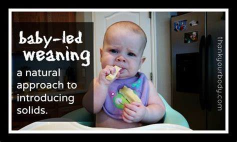 baby led weaning ab wann the world s catalog of ideas