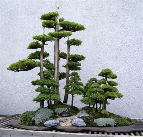 Wie Pflege Ich Einen Bonsai Baum 4451 bonsai baum pflege sorgen sie f 252 r eine sch 246 ne pflanze