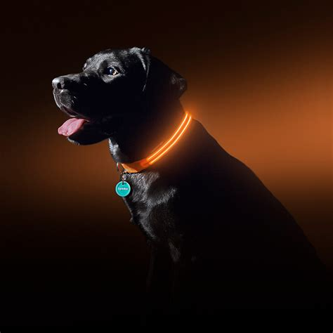 sunset orange led collar medium squeaker - Wandlen Modern Led