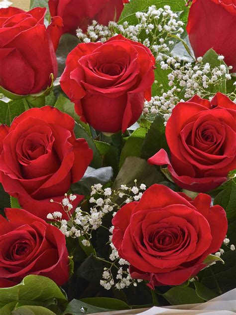 heavenly rose hand tied red  laurent perrier la