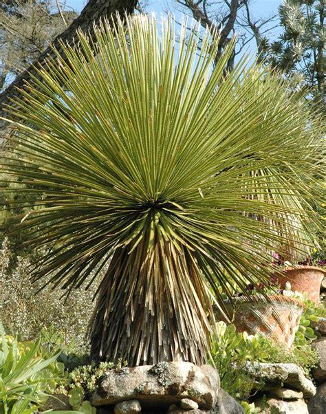 Merveilleux Plantes Et Jardins Mediterraneens #1: afyepyvugdss8w0kwk484kwgs-source-12124920.jpg