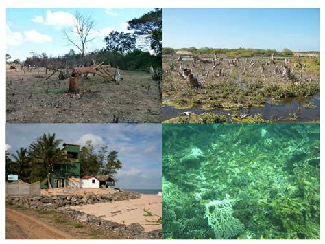 exle of habitat some exles of habitat loss in sri lanka top left forest