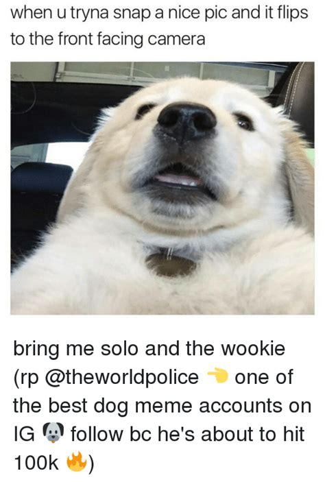 Best Dog Memes - 25 best memes about wooki wooki memes