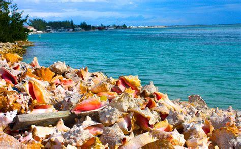 boat trips from key west to bahamas bimini bahamas yacht charters