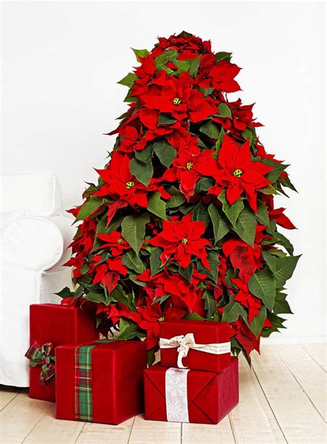 clear poinsetta holiday flower xmas lights florists create dress from poinsettia flowers garden style express co uk